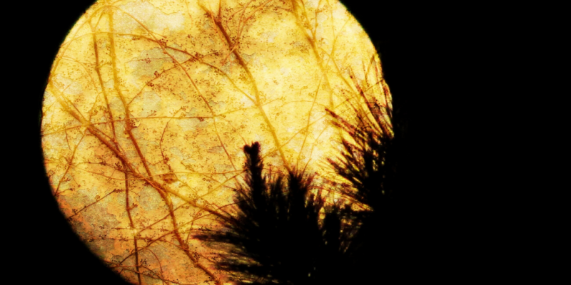 Full moon with tree branches slightly covering it